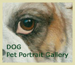 Dog Pet Portrait Gallery 1