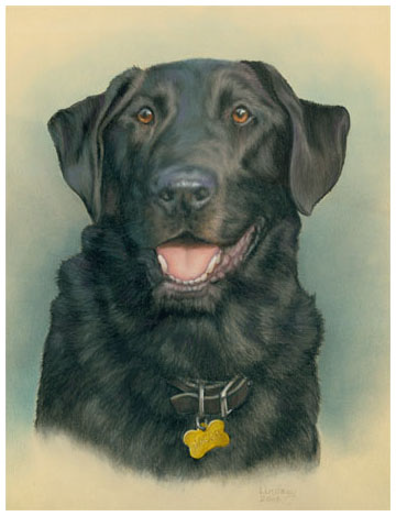 Labradore Dog Pet Portrait
