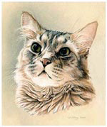 Cat Portrait of Bogey