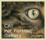 Cat Pet Portrait Gallery