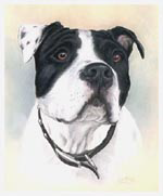 Dog Pet Portrait of Diesel