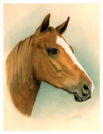 horse portrait of Shadrack mini