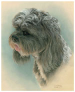 dog portrait of stoley mini