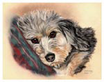 dog portrait of mollydog mini