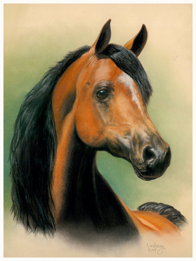 Horse portrait of Halim